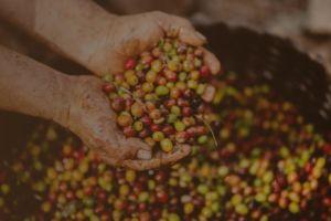 Kahve Çeşitleri ve Dünya Kahveleri